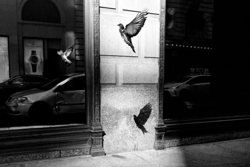 Alan Schaller Leica Australia - 8